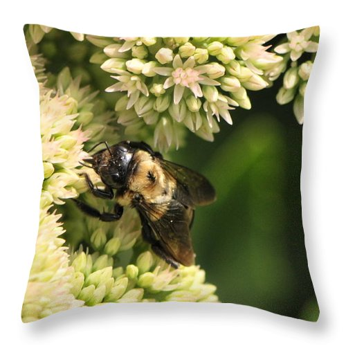 Bumble Bees Throw Pillow featuring the photograph Surrounded By Petals by Michelle DiGuardi