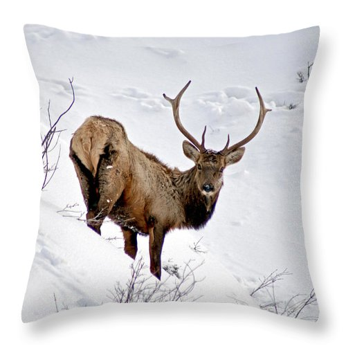Colorado Throw Pillow featuring the photograph Surviving by Jeremy Rhoades