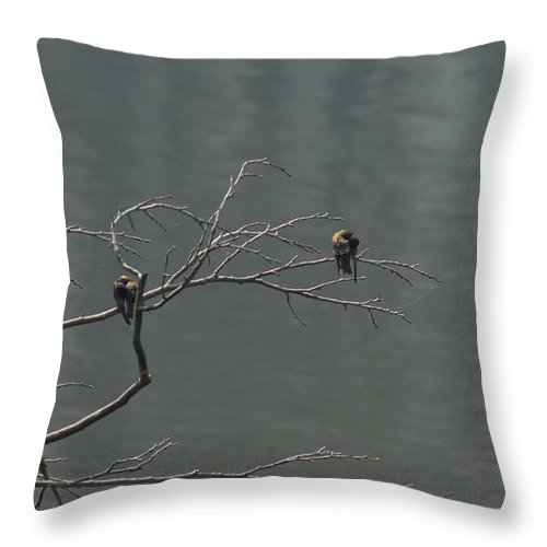 Digital Photography Throw Pillow featuring the photograph Swallows Bow by Kim Pate