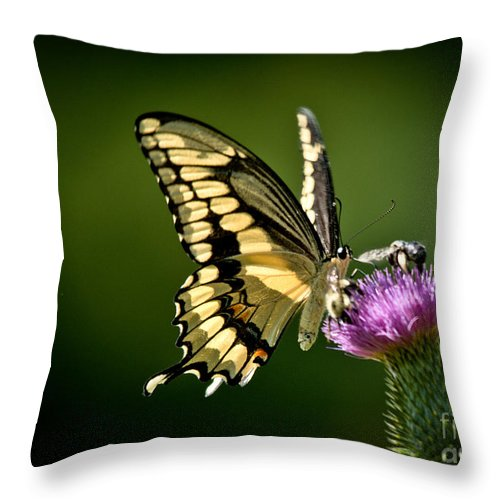 Throw Pillow featuring the photograph Swallowtail And Friends by Cheryl Baxter