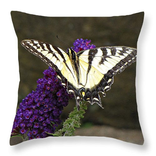 Swallowtail Throw Pillow featuring the photograph Swallowtail Butterfly by MTBobbins Photography