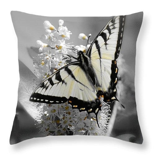 subtle Color Throw Pillow featuring the photograph Swallowtail Butterfly by Sharon Woerner