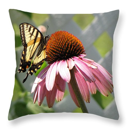 Swallowtail Throw Pillow featuring the photograph Looking Up At Swallowtail On Coneflower by MTBobbins Photography