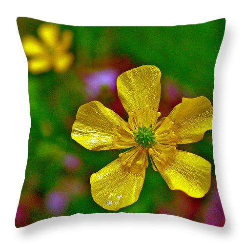 Swamp Buttercup Near Loon Lake In Sleeping Bear Dunes National Lakeshore Throw Pillow featuring the photograph Swamp Buttercup Near Loon Lake In Sleeping Bear Dunes National Lakeshore-michigan by Ruth Hager