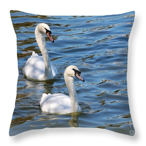 Swan Throw Pillow featuring the photograph Swan Day by Carol Groenen