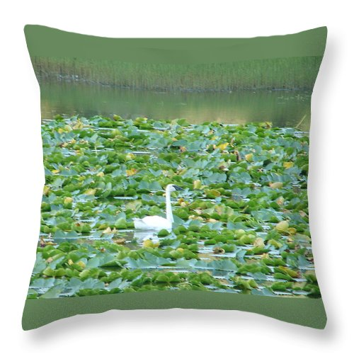 Swan Throw Pillow featuring the photograph Swan Lake by Lew Davis