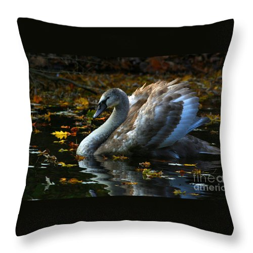 Swan Throw Pillow featuring the photograph Swan River By James Figielski by Paulinskill River Photography