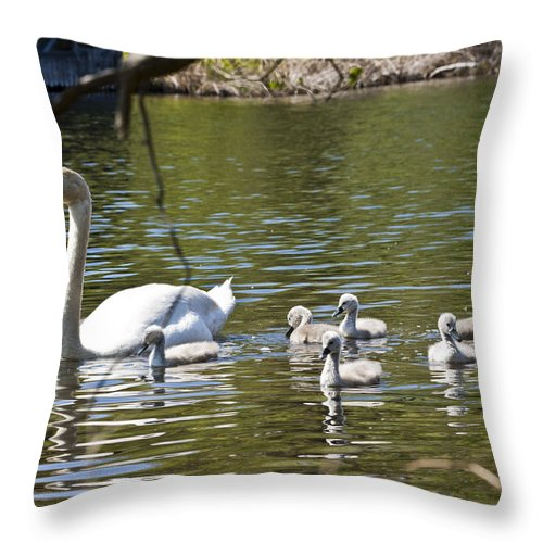 Swan Throw Pillow featuring the photograph Swan With Signets 3 by Dennis Coates