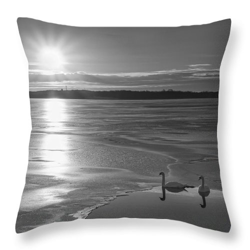 Frost Bite Throw Pillow featuring the photograph Swans Sunrise Bw by Michael Ver Sprill