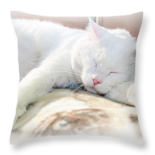 Andee Design Cats Throw Pillow featuring the photograph Sweet Dreams by Andee Design