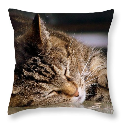 Dream Throw Pillow featuring the photograph Sweet Dreams by Eunice Miller