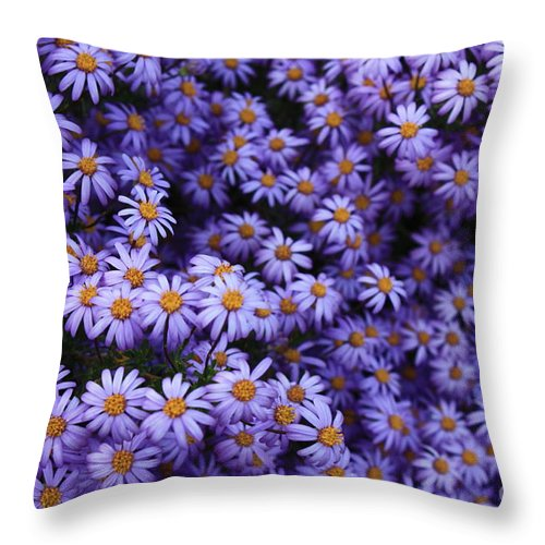 Purple Flower Throw Pillow featuring the photograph Sweet Dreams Of Purple Daisies by Carol Groenen