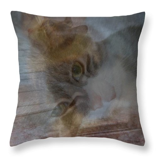 Cat Throw Pillow featuring the photograph Sweet Girl On A Summer's Day by Kay Novy