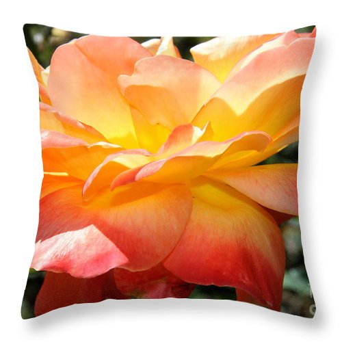 Rose Throw Pillow featuring the photograph Sweet Juliet Rose by Christiane Schulze Art And Photography