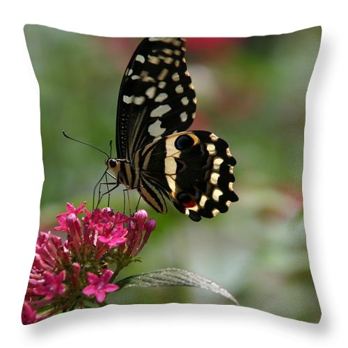 Sweet Nectar Throw Pillow featuring the photograph Sweet Nectar by Denyse Duhaime