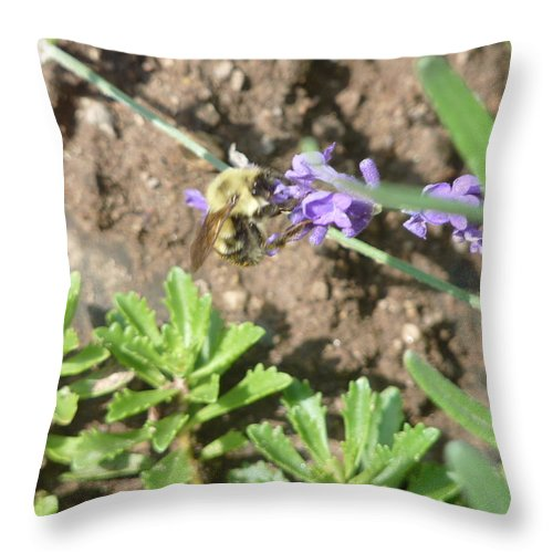 Bumble Bee Throw Pillow featuring the photograph Bumble Bee Sweet Garden Snack by Diane Palmer
