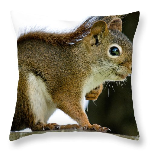 Squirrel Throw Pillow featuring the photograph Sweet Squirrel by Cheryl Baxter