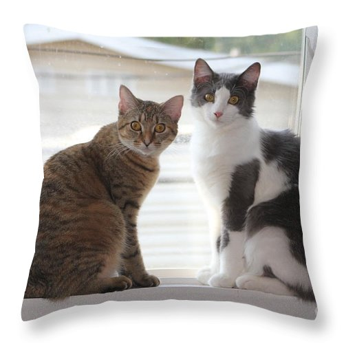 Cat Throw Pillow featuring the photograph Sweethearts by Michelle Powell