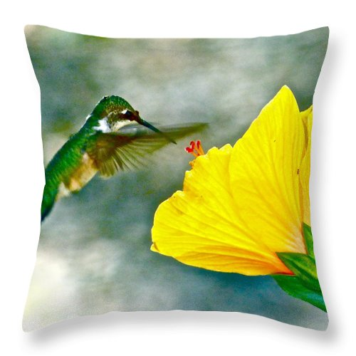 Hummingbird Throw Pillow featuring the photograph Sweets For The Sweet by Jean Wright