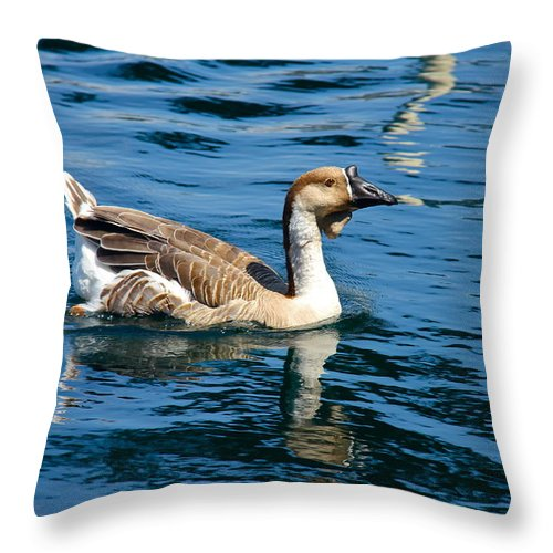 Bird Throw Pillow featuring the photograph Swimming African Brown Goose by Denise Mazzocco