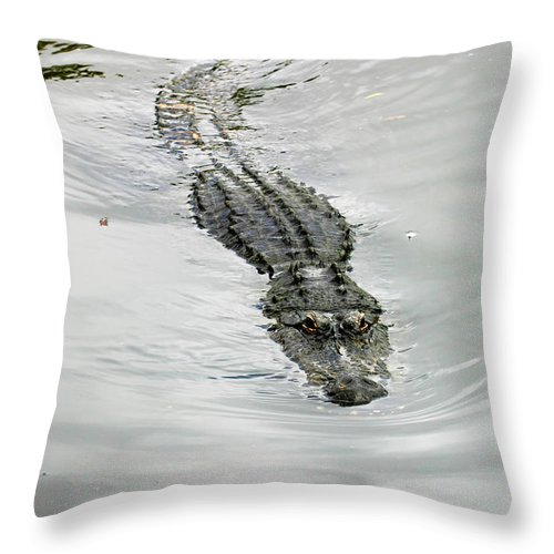 Florida Throw Pillow featuring the photograph Swimming Gator by Anthony Jones