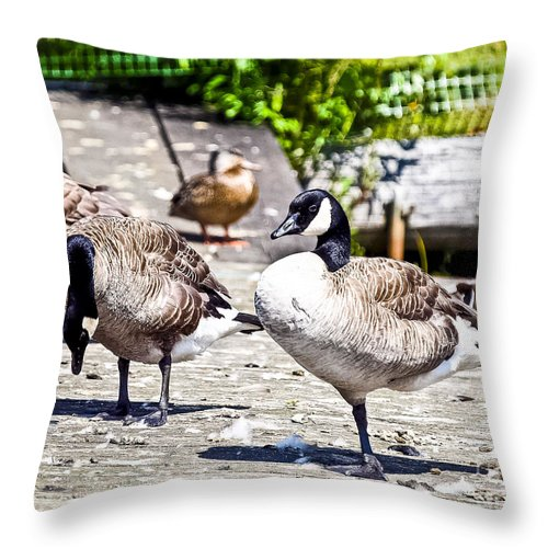 Sunny Day Throw Pillow featuring the photograph Swing In The Sun by David Fabian