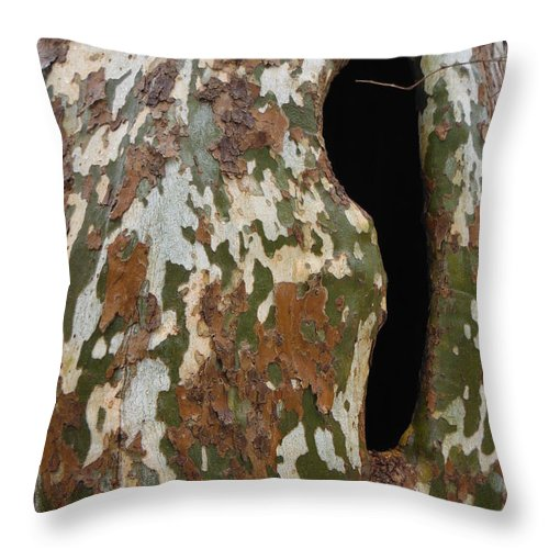 Sycamore Tree Throw Pillow featuring the photograph Sycamore Camouflage by Paddy Shaffer