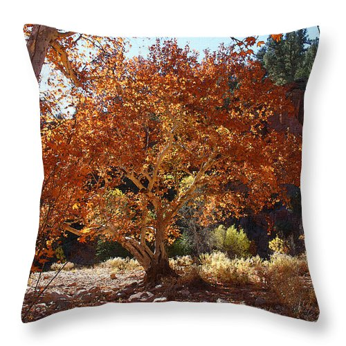 Sycamore Trees Throw Pillow featuring the photograph Sycamore Trees Fall Colors by Tom Janca