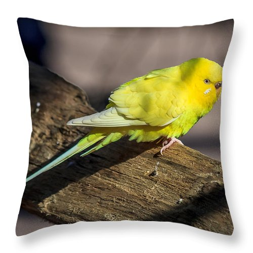 Birds Throw Pillow featuring the photograph Sylvan Heights 001 by Robert Mullen