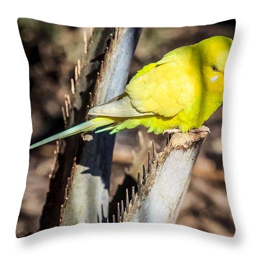 Birds Throw Pillow featuring the photograph Sylvan Heights 003 by Robert Mullen