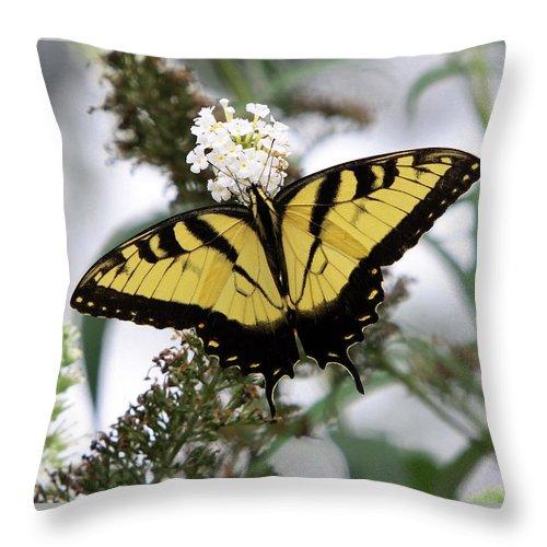 Symmetry Throw Pillow featuring the photograph Symmetry by John Freidenberg