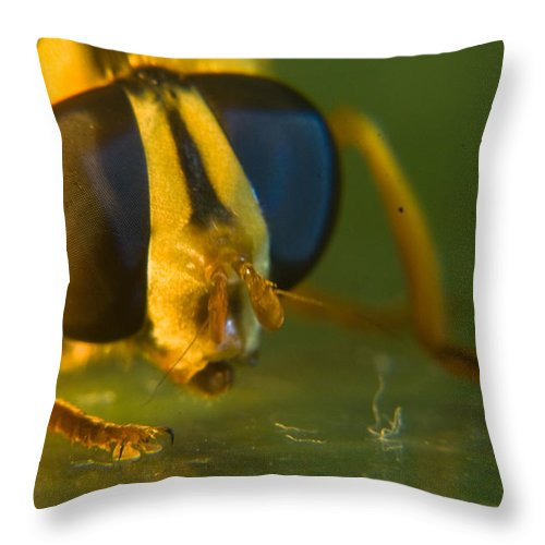 Syrphid Throw Pillow featuring the photograph Syrphid Eyes And Antennae by Douglas Barnett