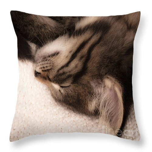 Animal Throw Pillow featuring the photograph Tabatha Twitchet by Jan Bickerton