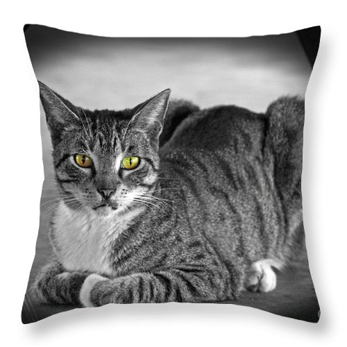 Cat Throw Pillow featuring the photograph Tabby Cat by Terri Mills