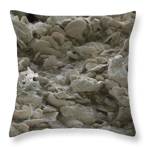 Tabby Throw Pillow featuring the photograph Tabby Detail by Jean Macaluso
