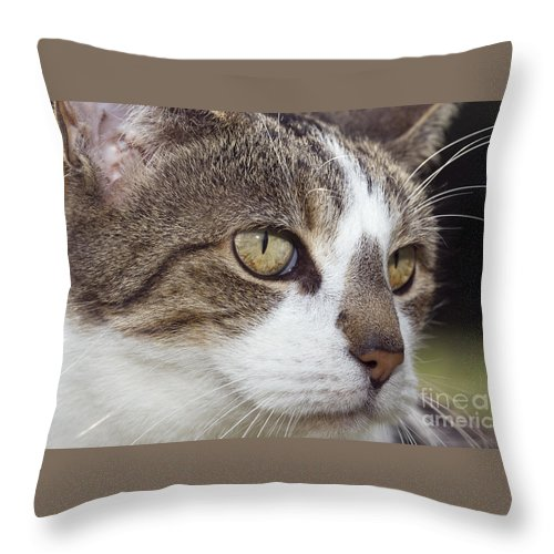 Tabby Throw Pillow featuring the photograph Tabby Cat by Julie Woodhouse
