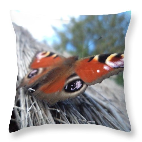 Butterfly Throw Pillow featuring the photograph Take Off by Krystyna Spink