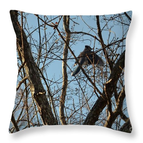 Takeoff - Bluejay Throw Pillow featuring the photograph Takeoff - Bluejay by Maria Urso