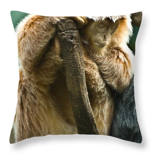 Ape Throw Pillow featuring the photograph Taking A Nap by Anthony Sacco