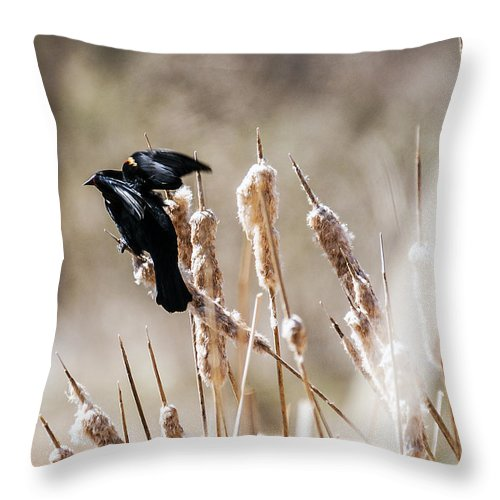 Spring Throw Pillow featuring the photograph Taking Flight by Edward Peterson