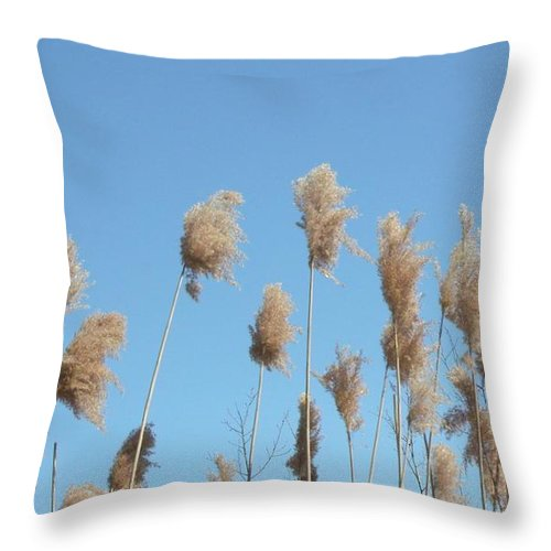 Real Photo Throw Pillow featuring the photograph Tall Feathered Grass Hits Sky by Gail Matthews