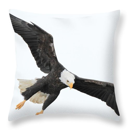 American Bald Eagle Throw Pillow featuring the photograph Talons Down by Coby Cooper
