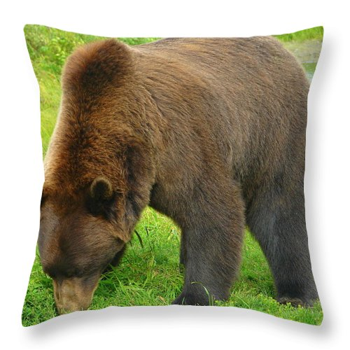Animal Throw Pillow featuring the photograph Tastes Like Grass by Lew Davis