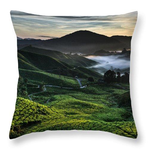 Tea Plantation Throw Pillow featuring the photograph Tea Plantation At Dawn by Dave Bowman