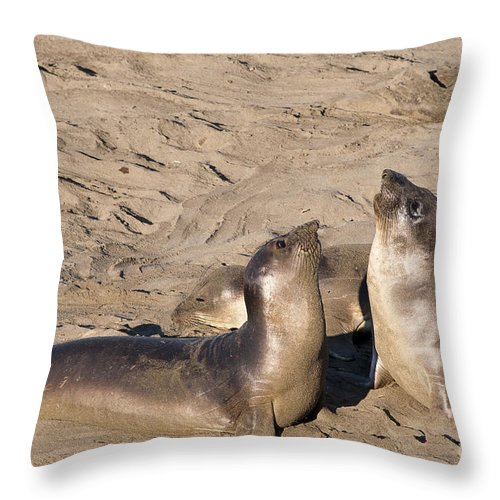 Seals Throw Pillow featuring the photograph Teach Me To Sing by Brenda Kean
