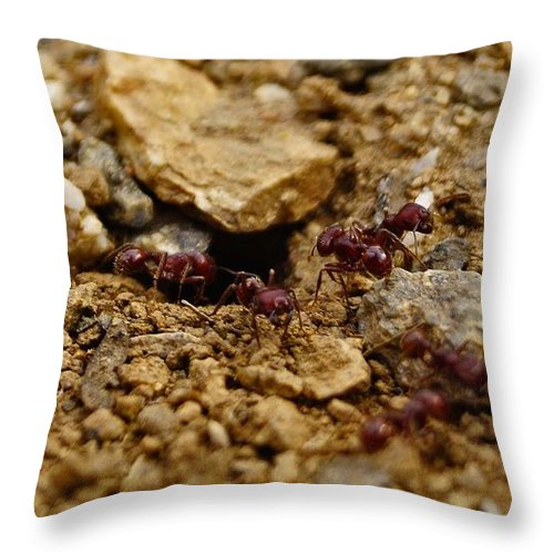 Ants Throw Pillow featuring the photograph Team Work by Patrick Moore