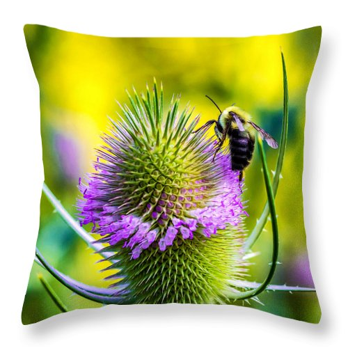 Flower Throw Pillow featuring the photograph Teasel And Bee by Steve Harrington