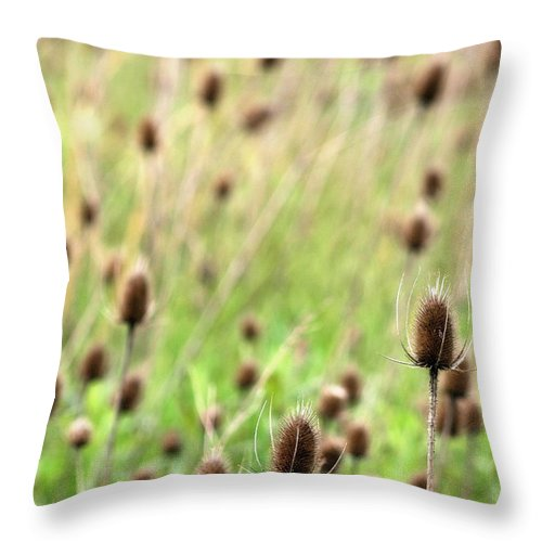 Thistle Throw Pillow featuring the photograph Teasel Meadow by Angela Rath