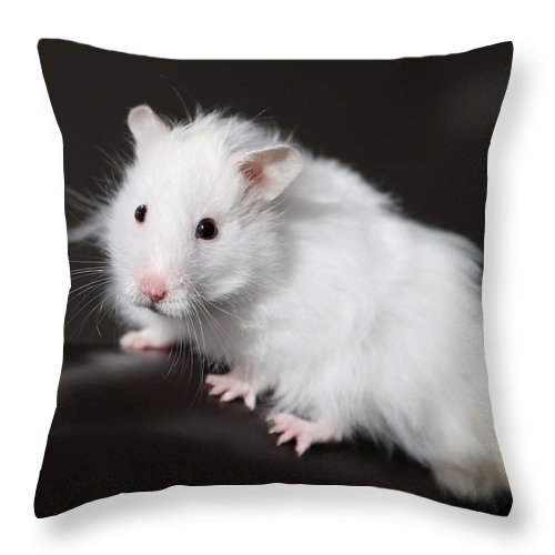 Teddy Throw Pillow featuring the photograph Teddy Bear Hamster by Sean Foreman