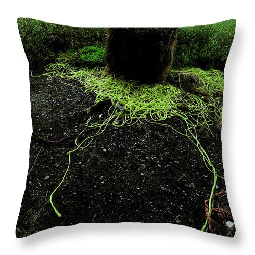 Bale Throw Pillow featuring the photograph Tentacles by Steve Taylor
